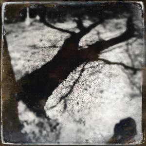 self-portrait w/hackberry shadow, 11/13